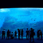 仙台(宮城)雨の日に出掛けるなら水族館がイイ!カップルも子連れも。