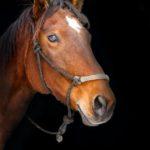 噂の現場。鎌倉にある乗馬施設。無許可営業と迷惑行為について。